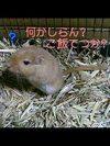 Pic_003_2