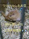 Pic_006